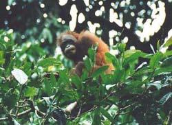 Borneo013.jpg
