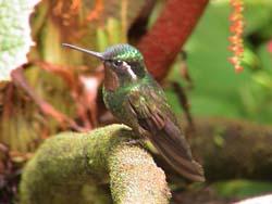 monteverde014.jpg