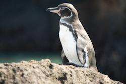 Pinguin 20090116 IMG_5060.jpg
