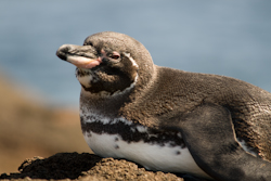 Pinguin 20090116 IMG_5083.jpg